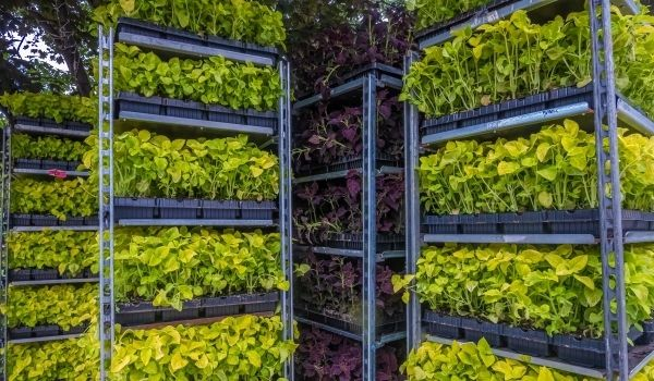 4 Ways to Increase Your Soil Based Vertical Farming