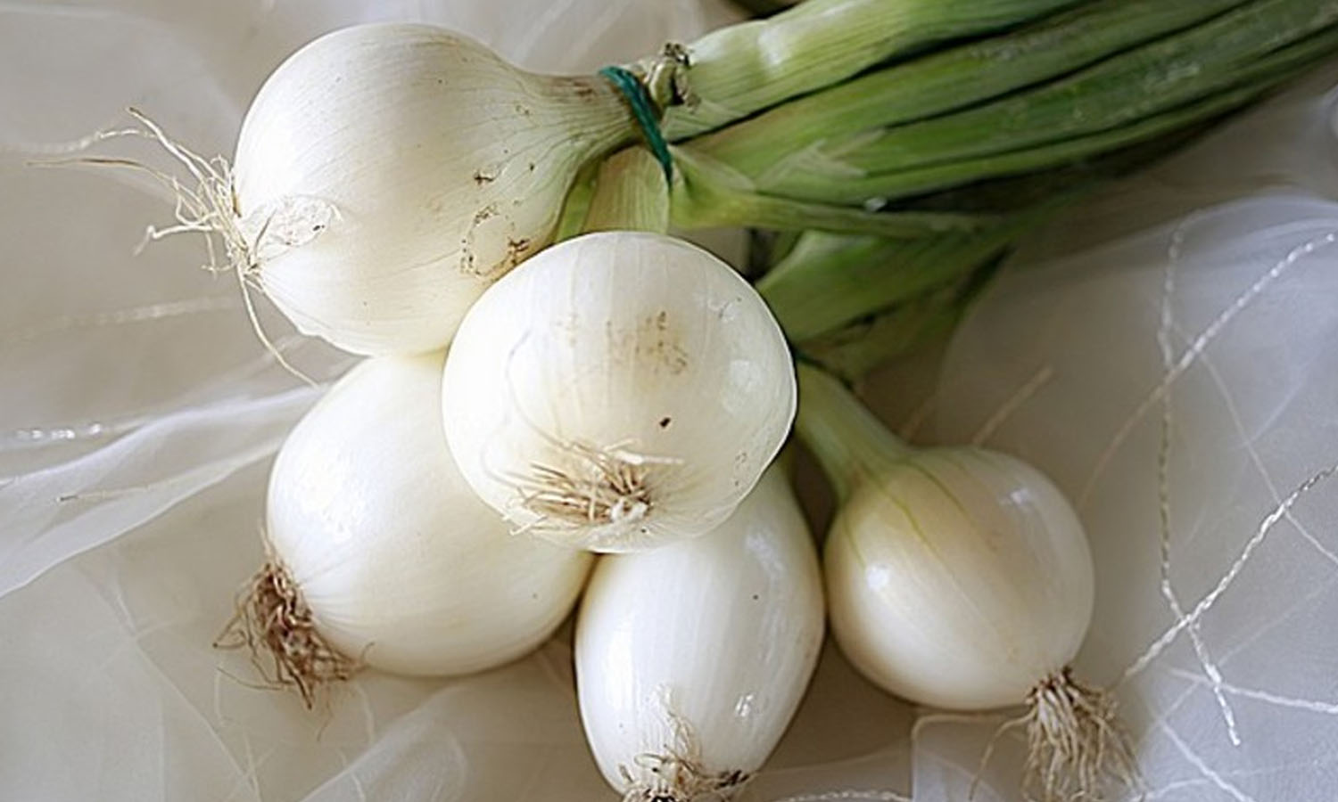 10 Healing Properties of Onion