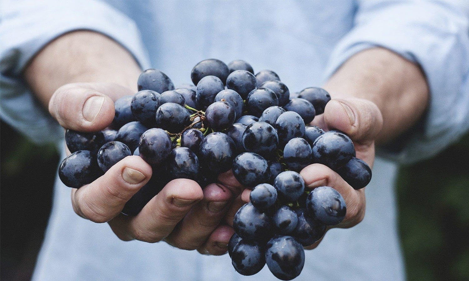The Incredible Health Benefits of Grapes You Need To Know
